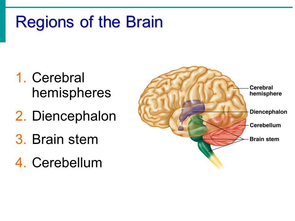 Regions of the Brain 1.Cerebral hemispheres 2.Diencephalon 3.Brain stem 4.Cerebellum