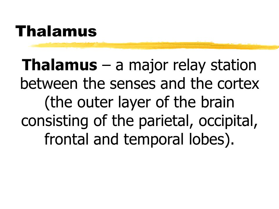 Thalamus Thalamus – a major relay station between the senses and the cortex (the outer layer of the brain consisting of the parietal, occipital, front