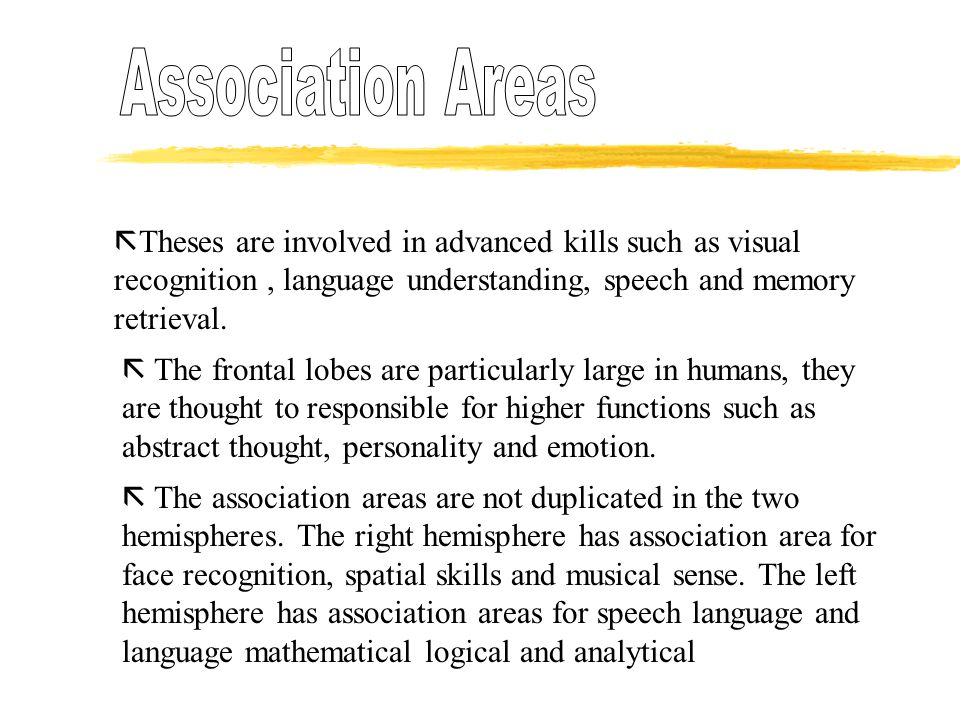  Theses are involved in advanced kills such as visual recognition, language understanding, speech and memory retrieval.  The frontal lobes are parti