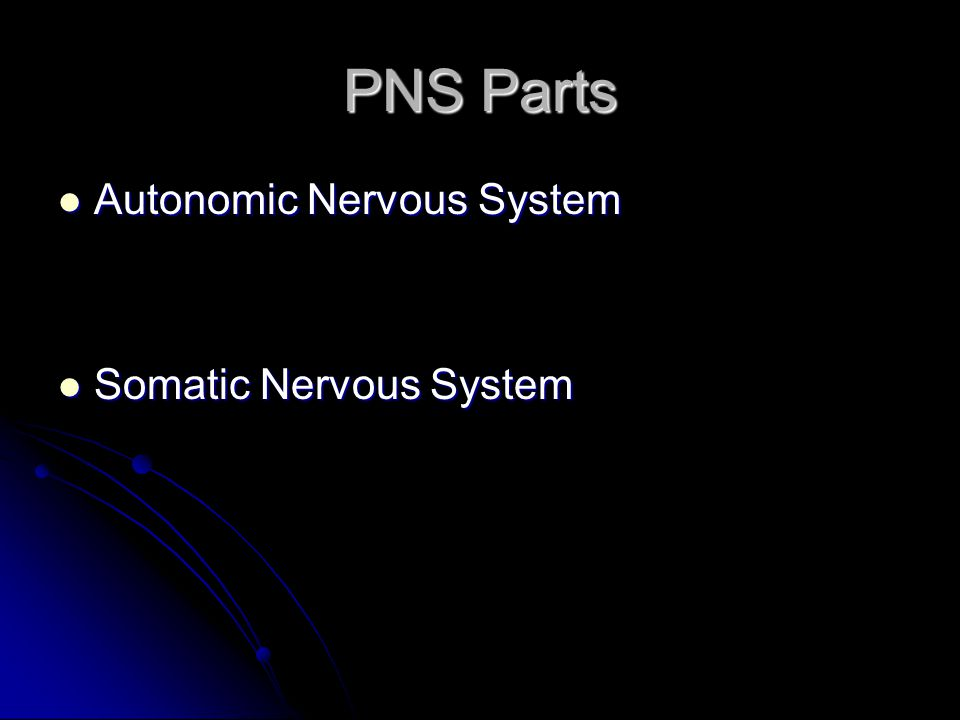 PNS Parts Autonomic Nervous System Somatic Nervous System