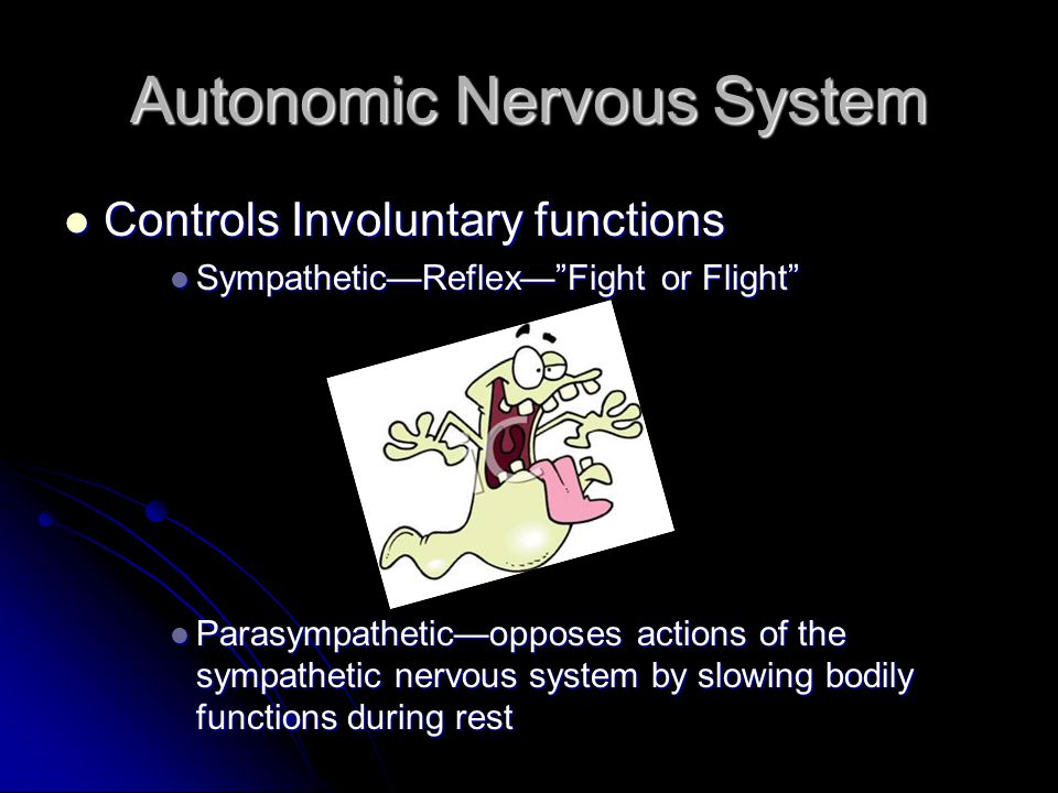 Autonomic Nervous System Controls Involuntary functions Sympathetic—Reflex— Fight or Flight Parasympathetic—opposes actions of the sympathetic nervous system by slowing bodily functions during rest