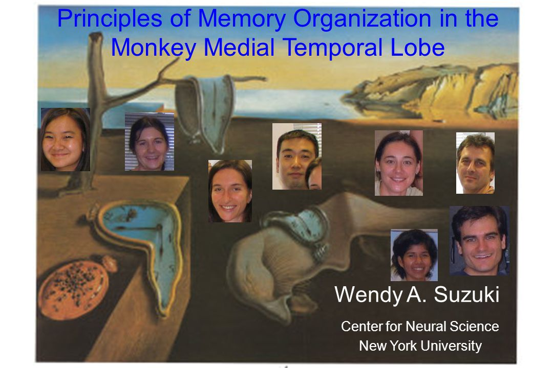 Principles of Memory Organization in the Monkey Medial Temporal Lobe Wendy A.