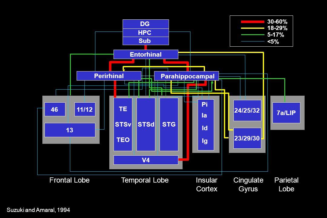 24/25/32 Pi Ia Id Ig Frontal LobeTemporal LobeInsular Cortex Cingulate Gyrus Parietal Lobe V4 23/29/30 7a/LIP STSdSTG TE STSv TEO 11/1246 13 DG Sub HPC 30-60% 18-29% 5-17% <5% Entorhinal Parahippocampal Perirhinal Suzuki and Amaral, 1994