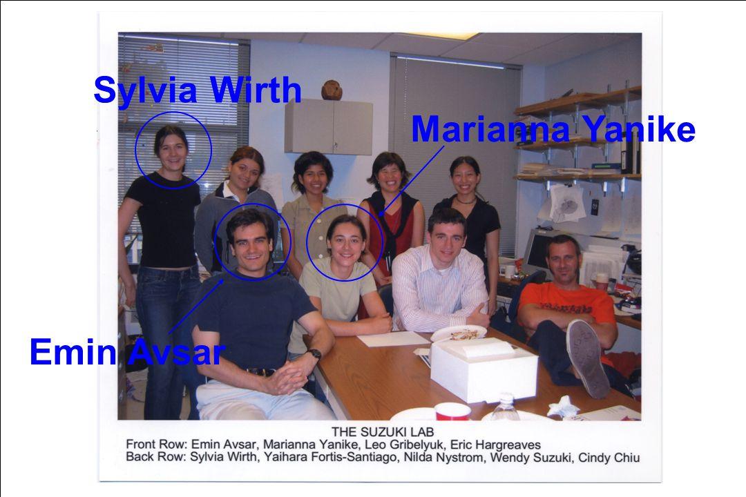 Sylvia Wirth Marianna Yanike Emin Avsar