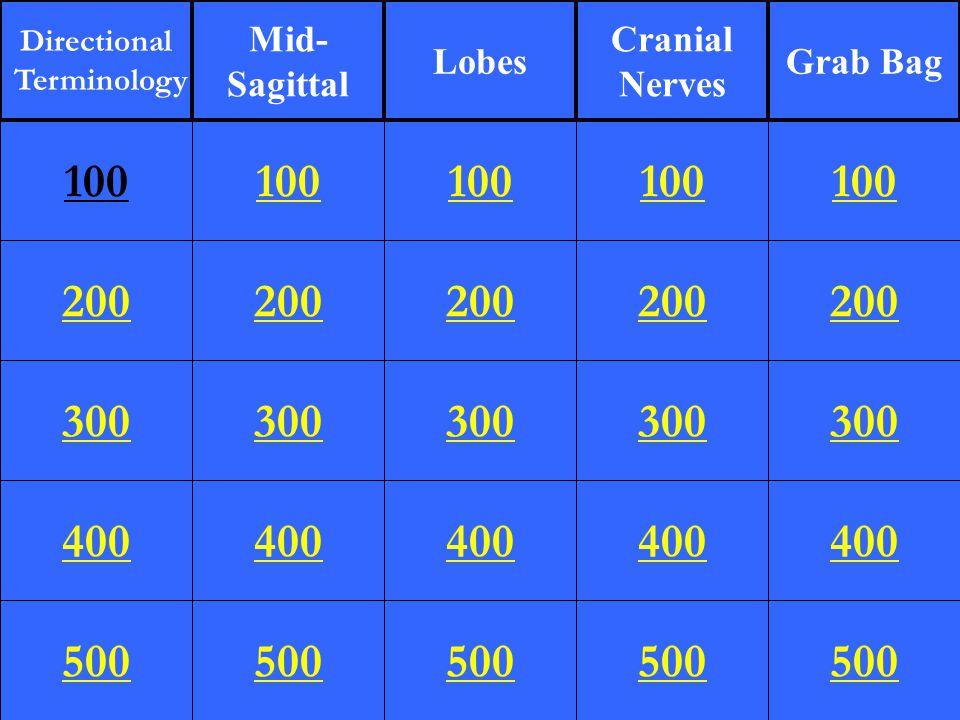 200 300 400 500 100 200 300 400 500 100 200 300 400 500 100 200 300 400 500 100 200 300 400 500 100 Directional Terminology Mid- Sagittal Lobes Cranial Nerves Grab Bag