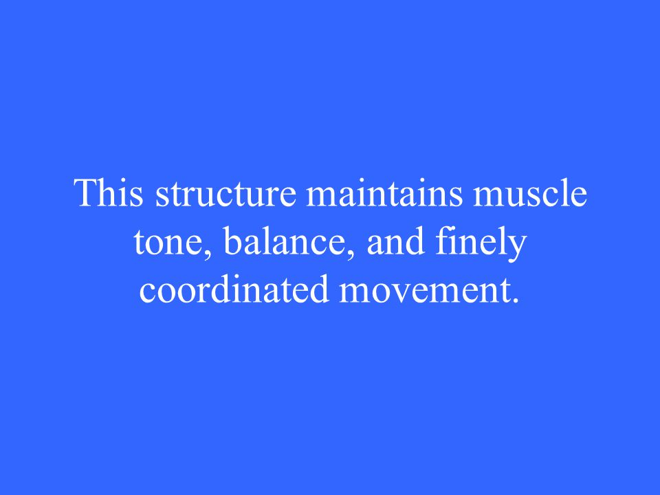 This structure maintains muscle tone, balance, and finely coordinated movement.