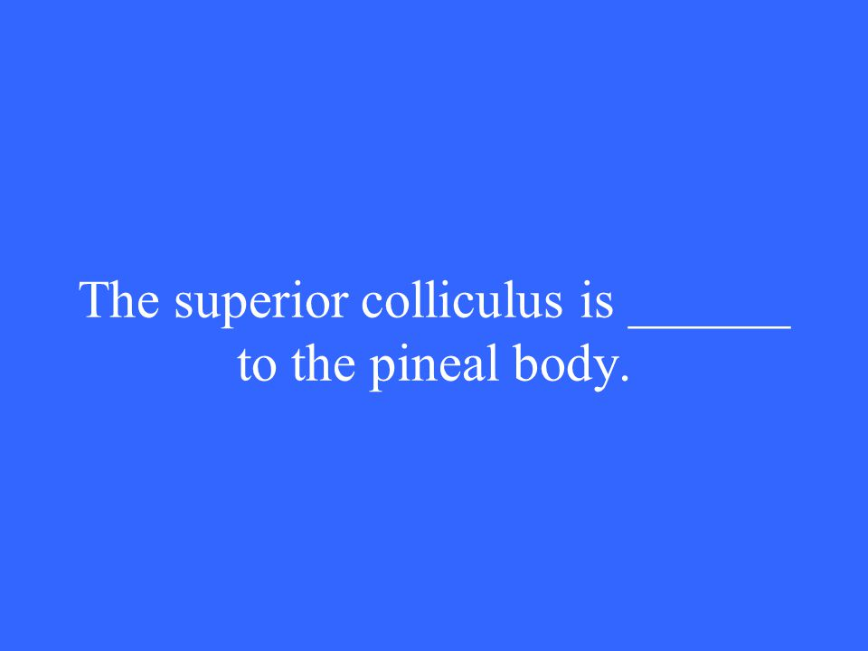 The superior colliculus is ______ to the pineal body.
