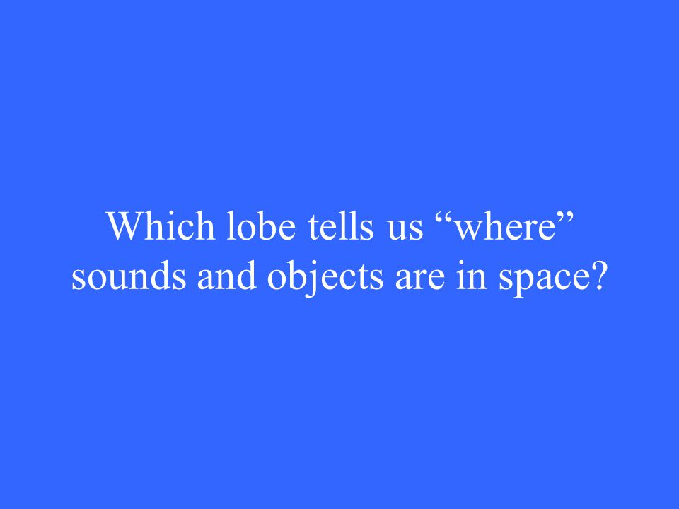 Which lobe tells us where sounds and objects are in space?