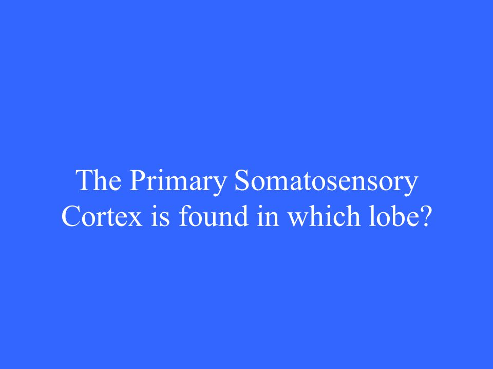 The Primary Somatosensory Cortex is found in which lobe