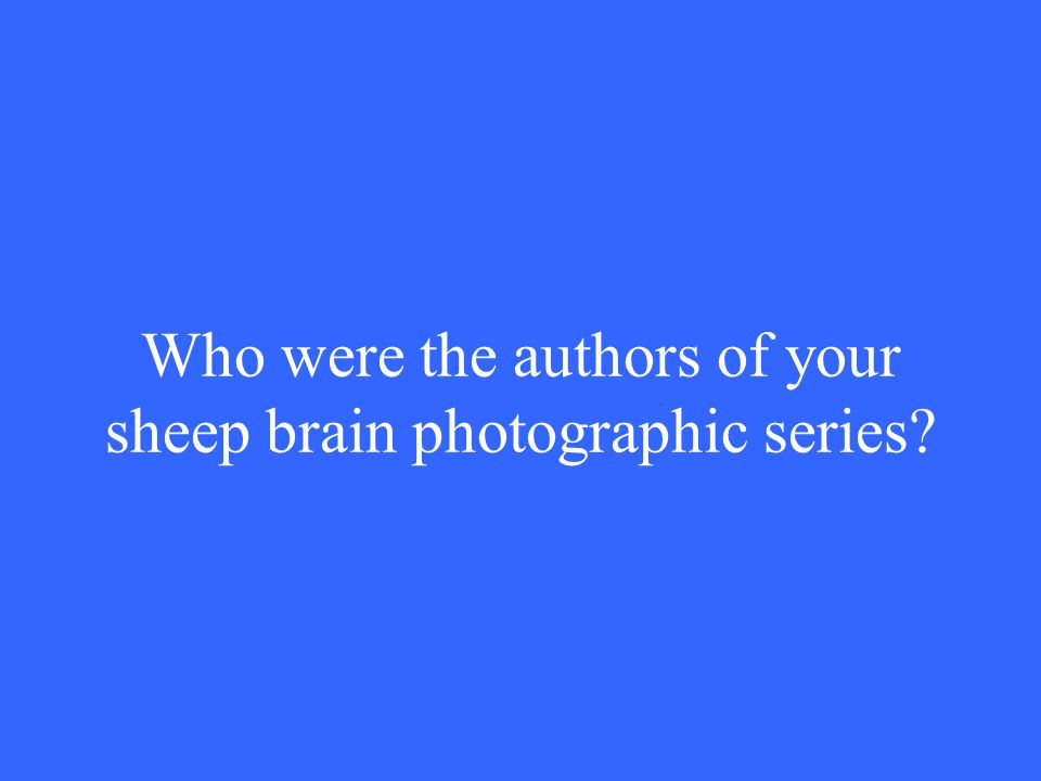 Who were the authors of your sheep brain photographic series?
