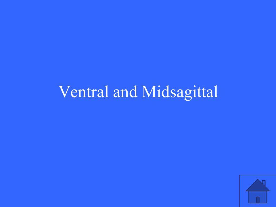 Ventral and Midsagittal