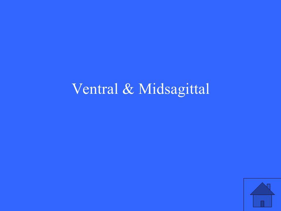 Ventral & Midsagittal