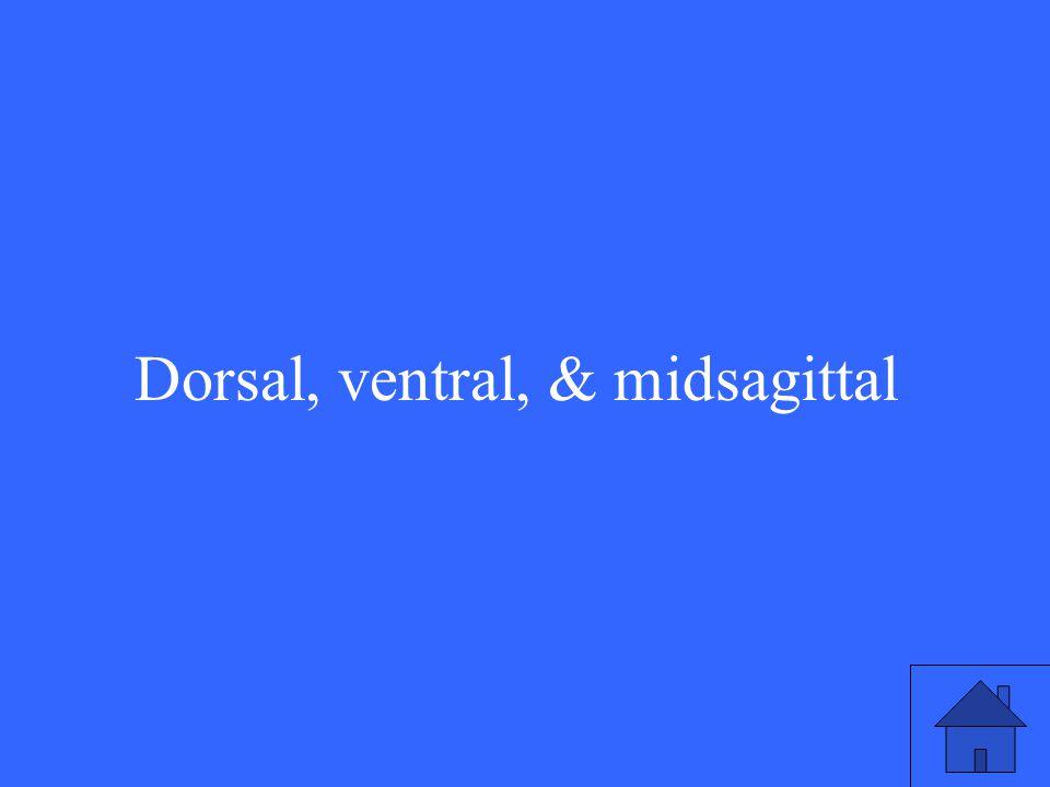 Dorsal, ventral, & midsagittal