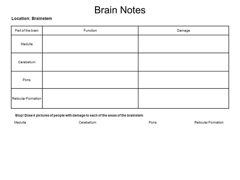 Brain Notes Location: Brainstem Part of the brainFunctionDamage Medulla Cerebellum Pons Reticular Formation Stop.
