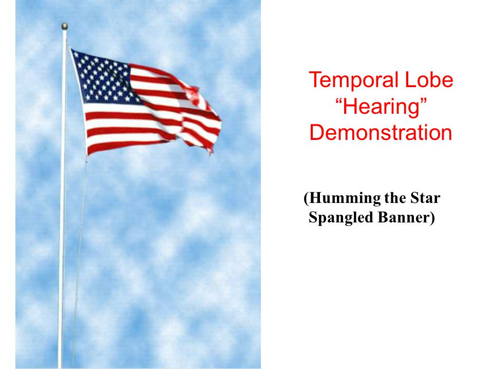 """© West Educational Publishing Temporal Lobe """"Hearing"""" Demonstration (Humming the Star Spangled Banner)"""