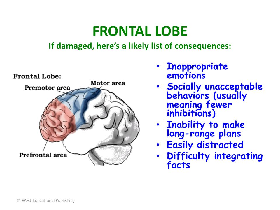 © West Educational Publishing WERNICKE'S area is located in the left temporal lobe and is involved in the process of understanding (processing) words we hear spoken.
