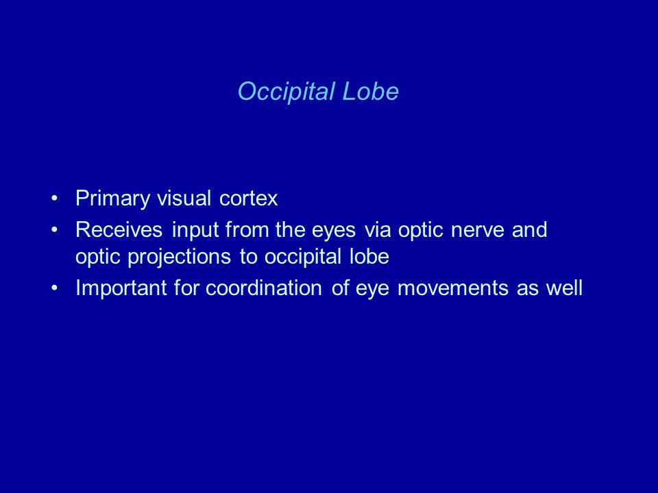 Occipital Lobe Primary visual cortex Receives input from the eyes via optic nerve and optic projections to occipital lobe Important for coordination o