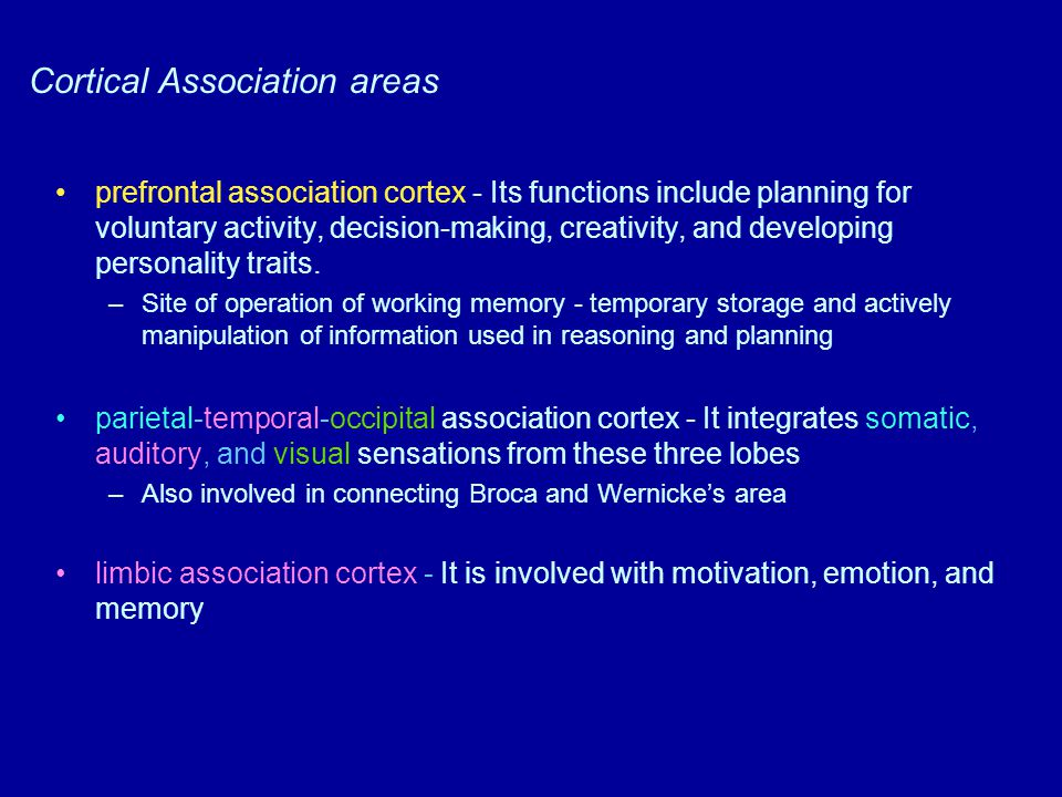 Cortical Association areas prefrontal association cortex - Its functions include planning for voluntary activity, decision-making, creativity, and dev
