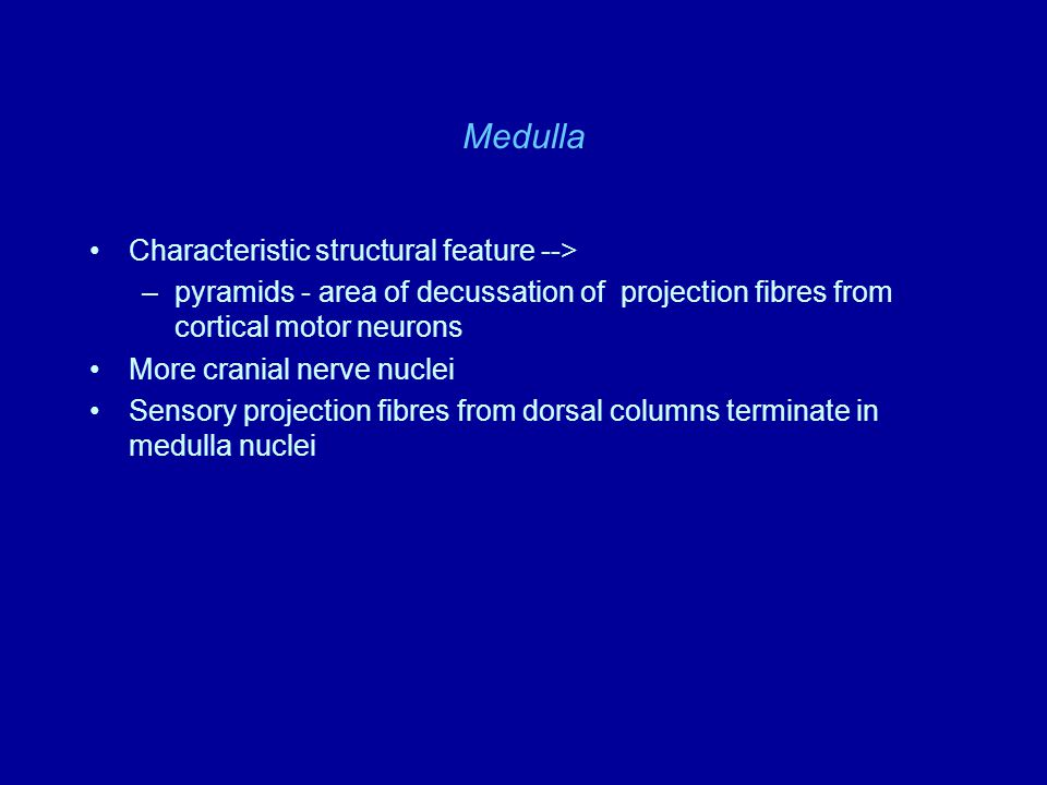 Medulla Characteristic structural feature --> –pyramids - area of decussation of projection fibres from cortical motor neurons More cranial nerve nucl