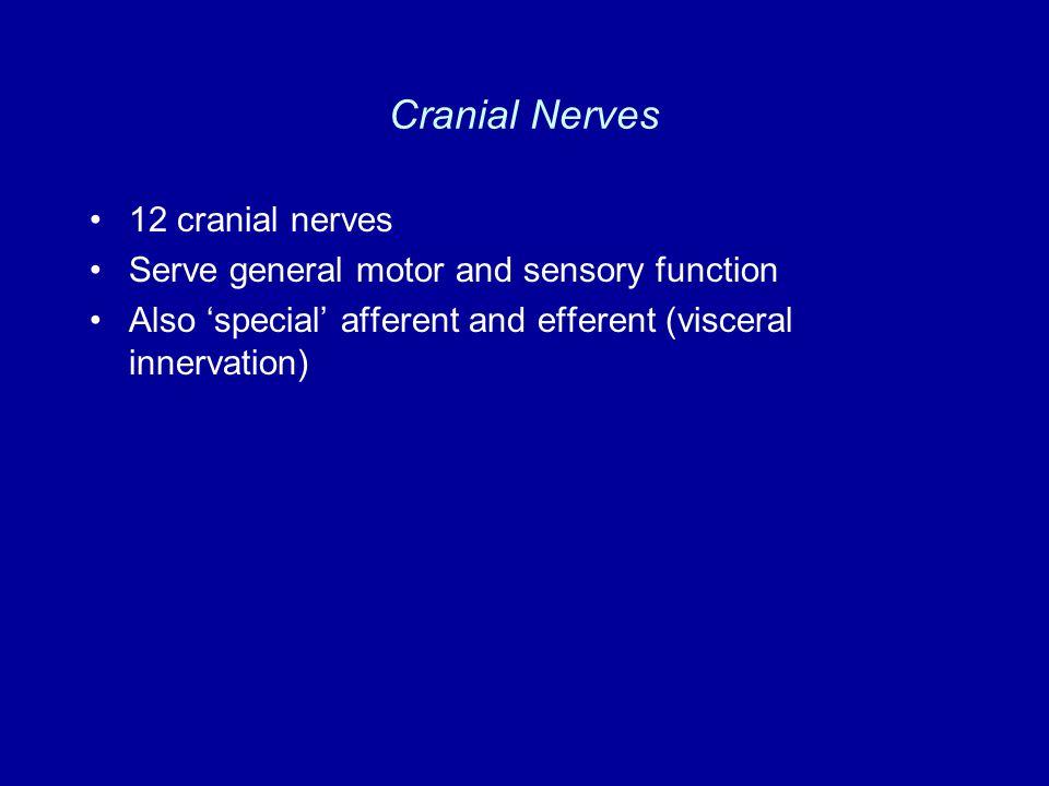 Cranial Nerves 12 cranial nerves Serve general motor and sensory function Also 'special' afferent and efferent (visceral innervation)