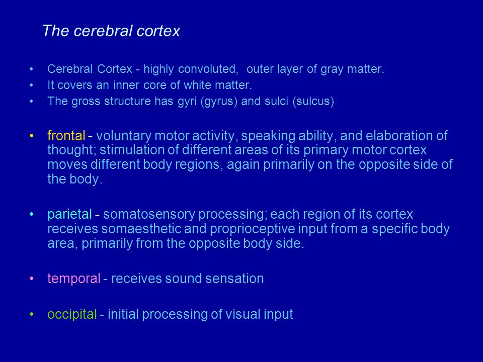 Supplementary motor area (programming of complex movement) Primary motor cortex (Voluntary movement) Central sulcus Somatosensory cortex (Somesthetic sensation and proprioception) Posterior parietal cortex (integration of somatosensory and visual input) Wernicke's area (speech understanding) Parietal lobe Parietal-temporal-occipital association cortex (integraton of all sensory input- imp in language) Occipital lobe Primary visual cortex Temporal lobe Limbic association cortex (motivation, emotion, memory) Primary auditory cortex Broca's area (speech formation) Frontal lobe Premotor cortex (coordination of complex movements) Prefrontal association cortex (planning for voluntary activity; decision making; personality traits)
