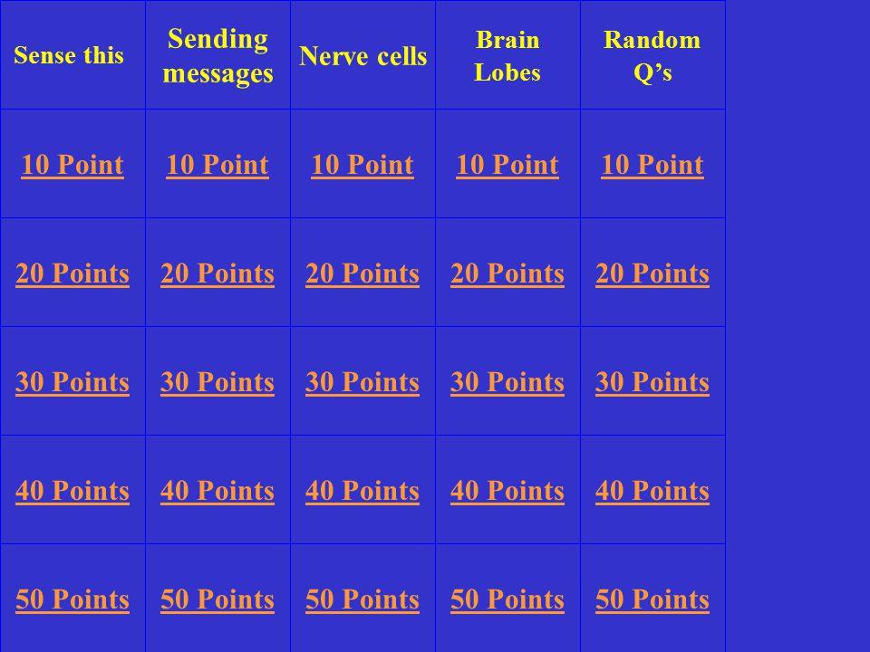 Sense this Sending messages Brain Lobes Random Q's 10 Point 20 Points 30 Points 40 Points 50 Points 10 Point 20 Points 30 Points 40 Points 50 Points 30 Points 40 Points 50 Points Nerve cells