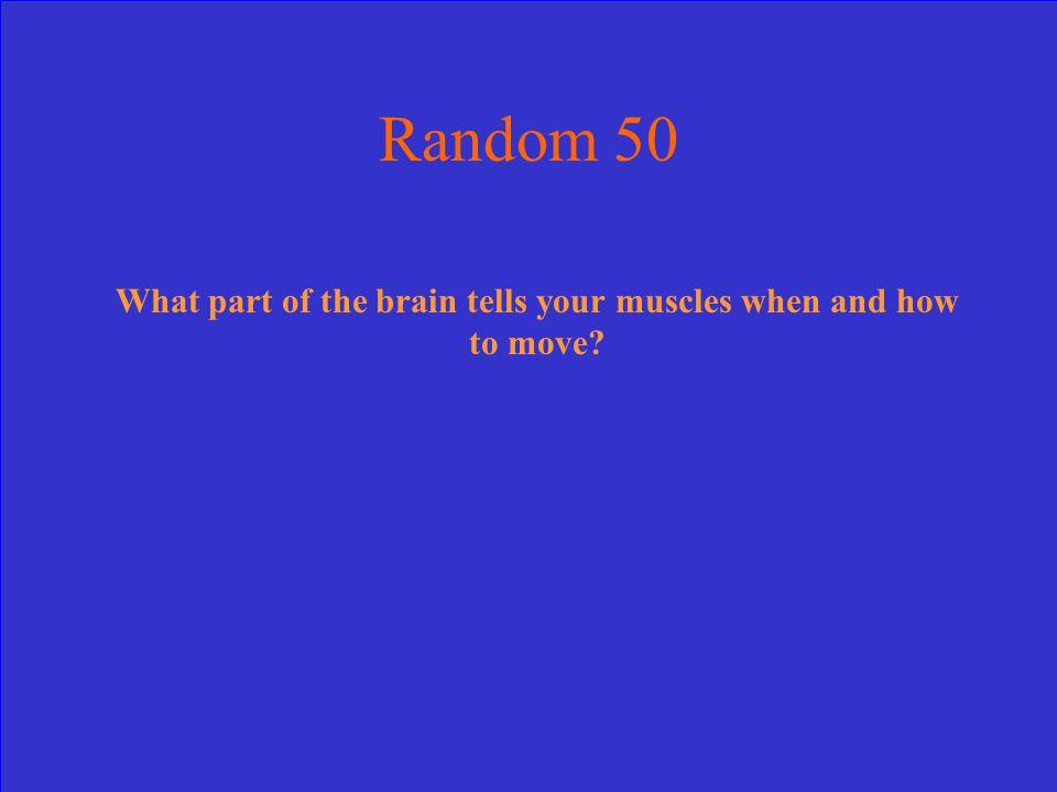 B- Brain Stem-40pts.