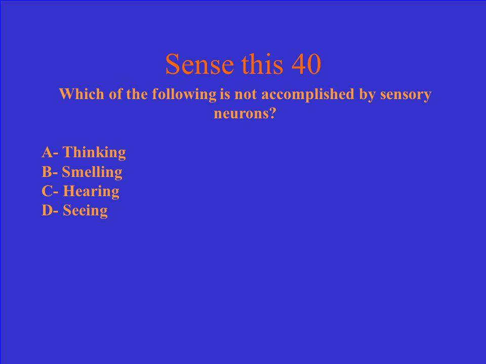 B- Sensory – 30pts.