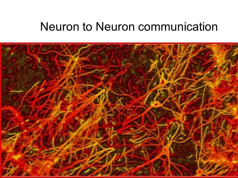 Neuron to Neuron communication