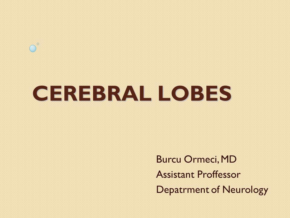 CEREBRAL LOBES Burcu Ormeci, MD Assistant Proffessor Depatrment of Neurology
