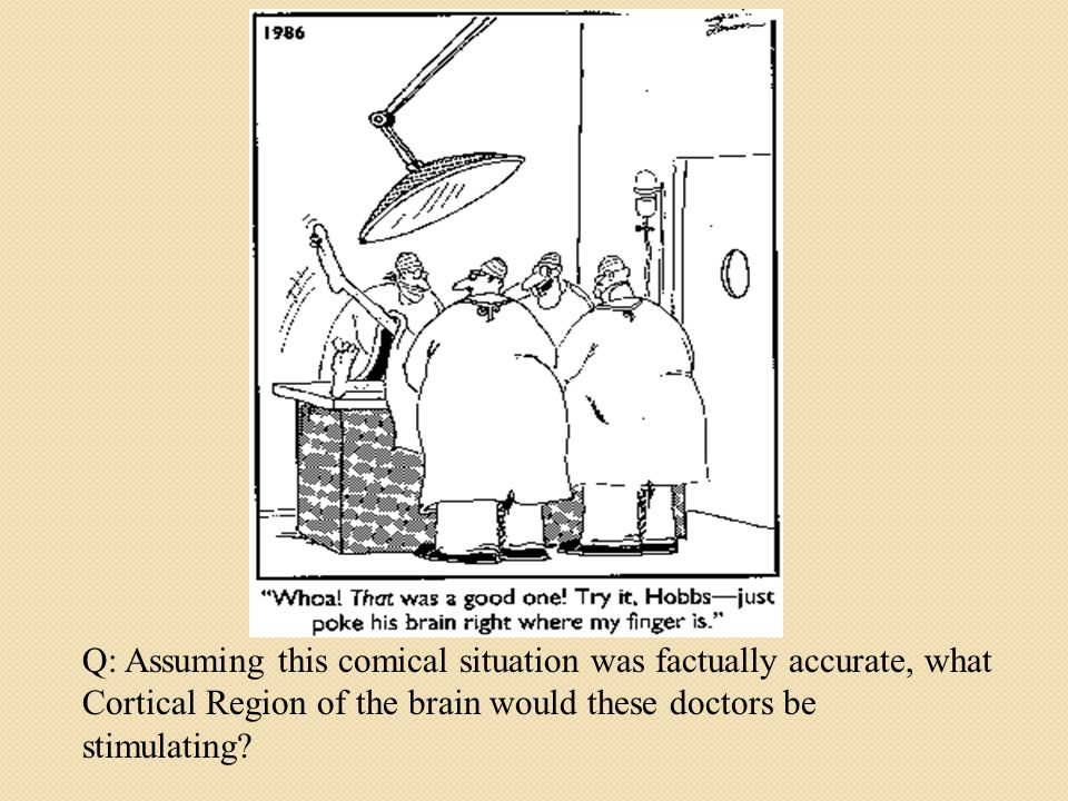 Q: Assuming this comical situation was factually accurate, what Cortical Region of the brain would these doctors be stimulating?