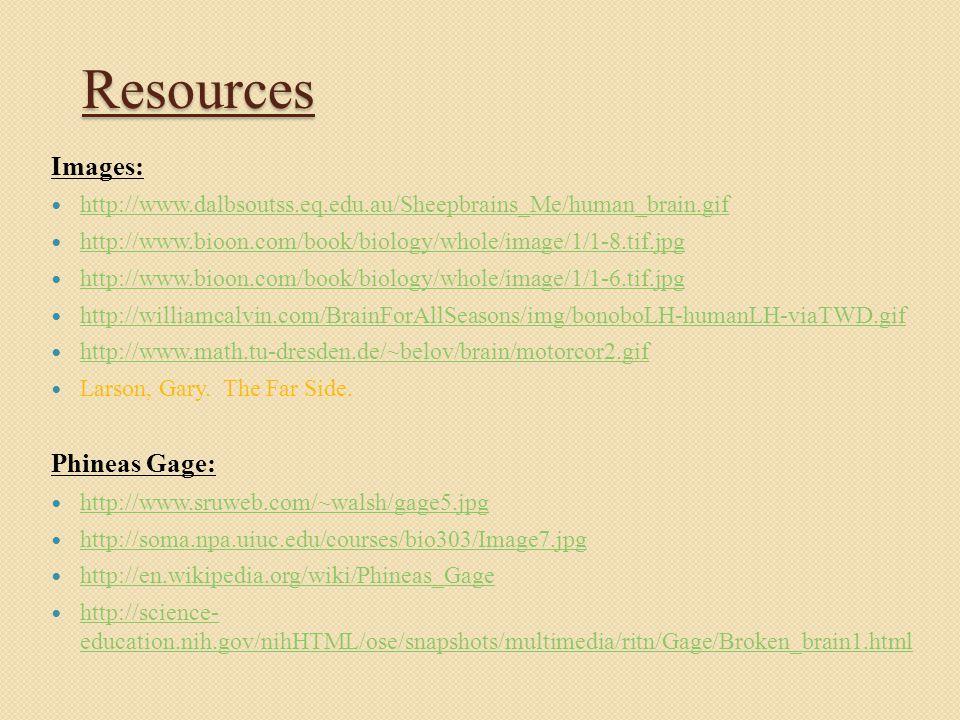 Resources Images: http://www.dalbsoutss.eq.edu.au/Sheepbrains_Me/human_brain.gif http://www.bioon.com/book/biology/whole/image/1/1-8.tif.jpg http://www.bioon.com/book/biology/whole/image/1/1-6.tif.jpg http://williamcalvin.com/BrainForAllSeasons/img/bonoboLH-humanLH-viaTWD.gif http://www.math.tu-dresden.de/~belov/brain/motorcor2.gif Larson, Gary.