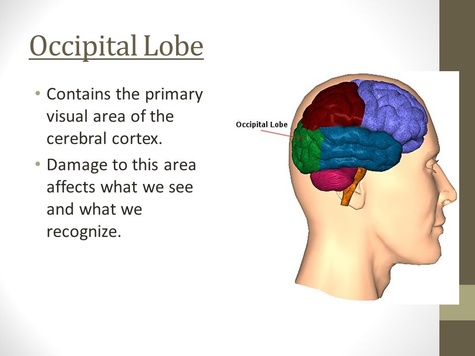 Parietal Lobe Contains the sensory cortex, which is responsible for messages received from the skin senses.