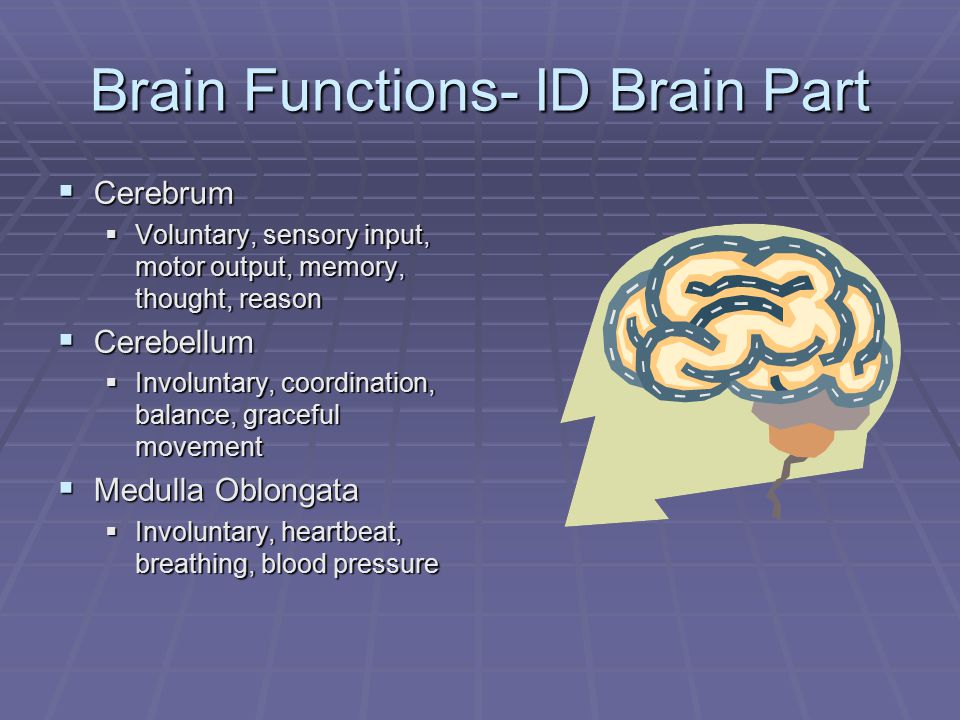 Brain Functions- ID Brain Part  Cerebrum  Voluntary, sensory input, motor output, memory, thought, reason  Cerebellum  Involuntary, coordination, balance, graceful movement  Medulla Oblongata  Involuntary, heartbeat, breathing, blood pressure