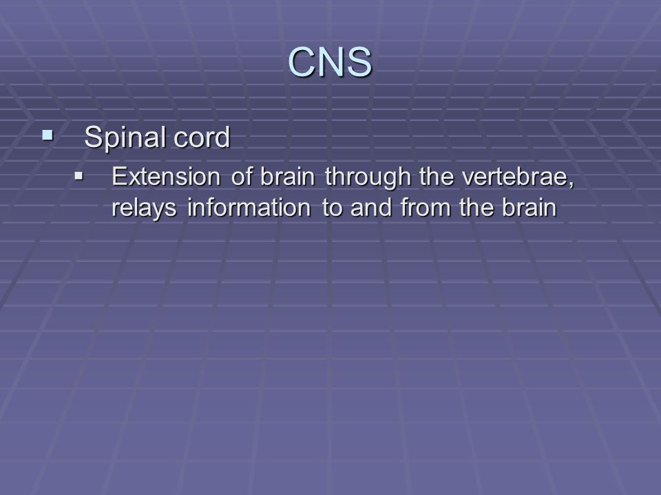 CNS  Spinal cord  Extension of brain through the vertebrae, relays information to and from the brain