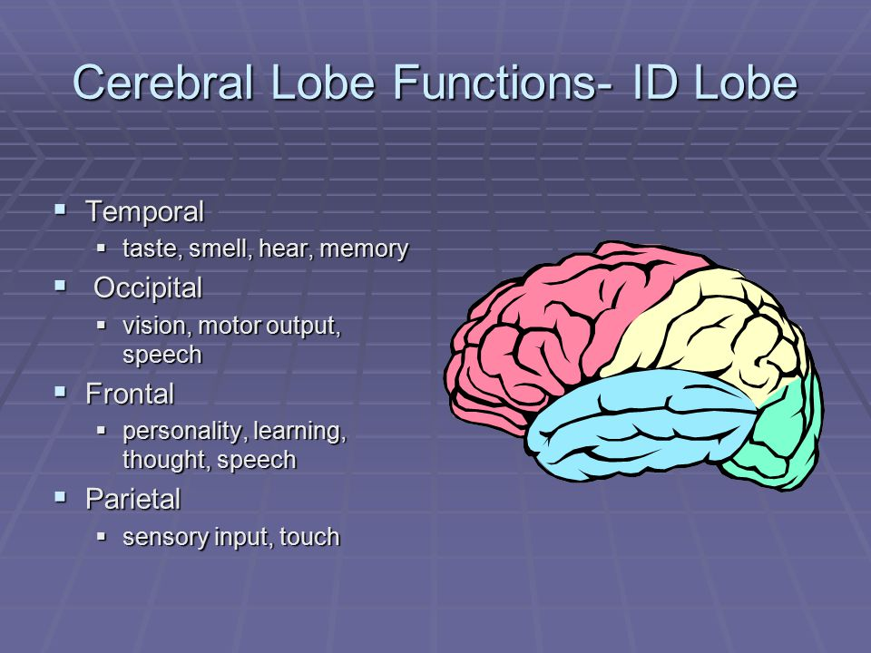 Cerebral Lobe Functions- ID Lobe  Temporal  taste, smell, hear, memory  Occipital  vision, motor output, speech  Frontal  personality, learning, thought, speech  Parietal  sensory input, touch