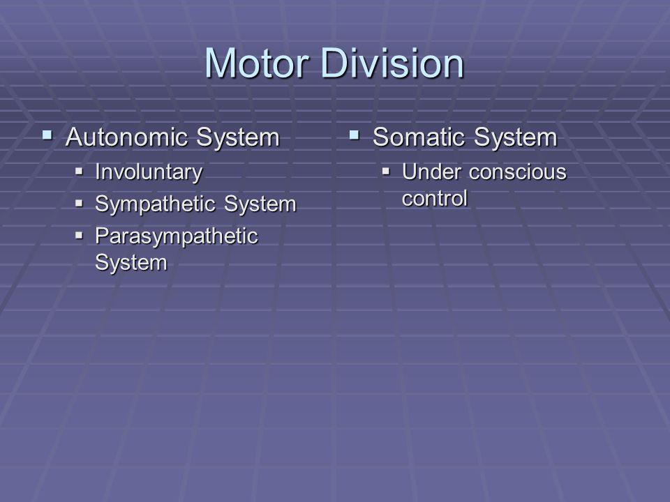 Motor Division  Autonomic System  Involuntary  Sympathetic System  Parasympathetic System  Somatic System  Under conscious control