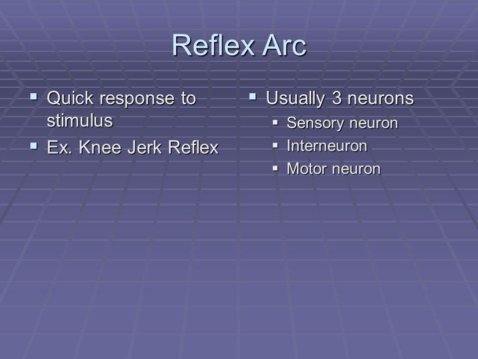 Reflex Arc  Quick response to stimulus  Ex.