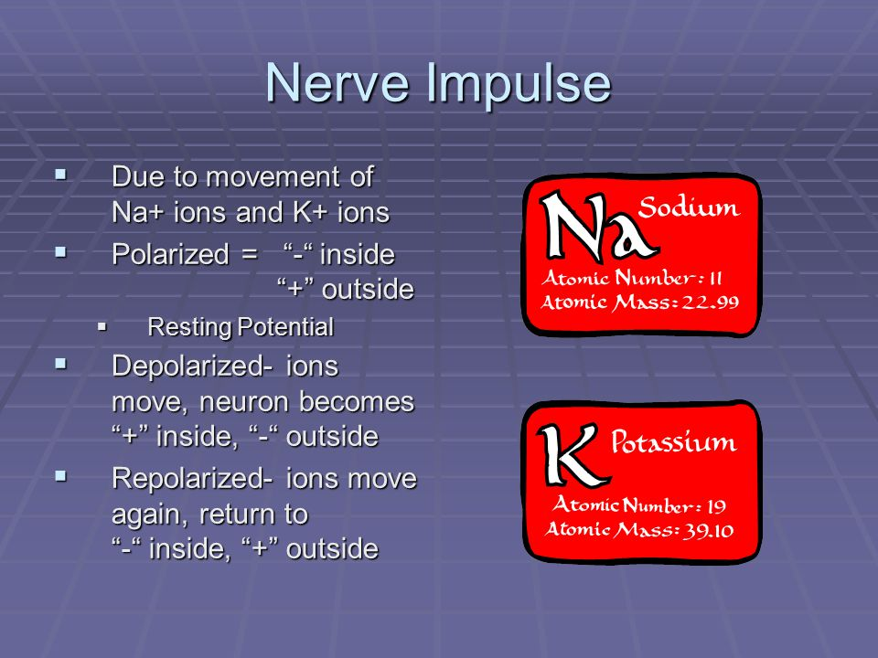 Nerve Impulse  Action Potential  Depolarization and repolarization of a neuron membrane  Threshold  The minimum level of stimulus needed to start an impulse  Neurotransmitter  Chemicals released at the axon terminals  Carry the impulse across the synaptic gap