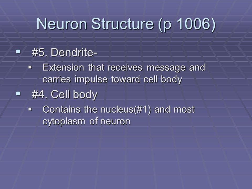 Neuron Structure (p 1006)  #5.