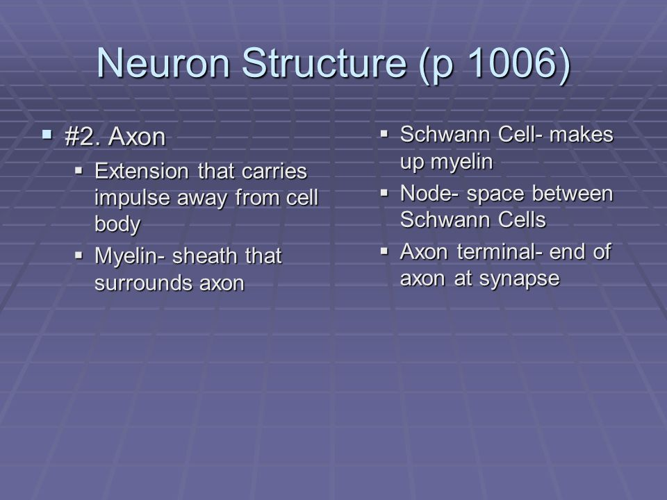 Diagram- Neuron Structure (p 1006)  #3. Synapse  Small gap between neurons
