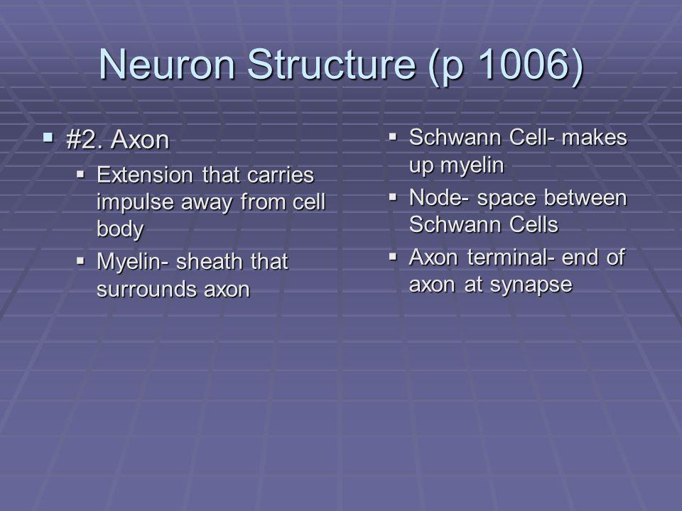 CNS  Diagram- Lobes of Cerebrum  a.frontal lobe  b.