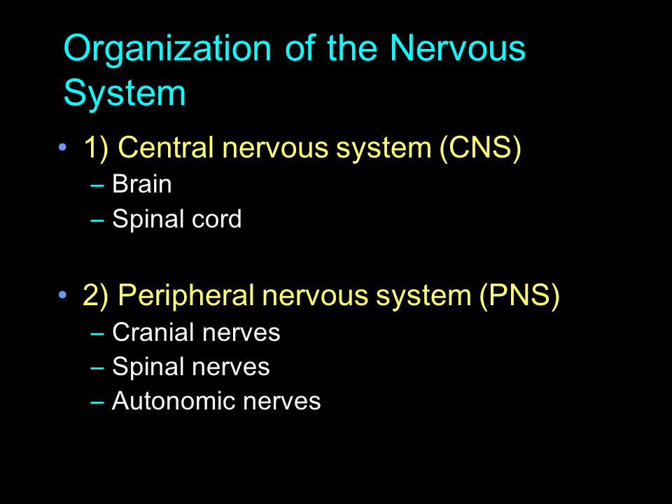 Organization of the Nervous System 1) Central nervous system (CNS) –Brain –Spinal cord 2) Peripheral nervous system (PNS) –Cranial nerves –Spinal nerv