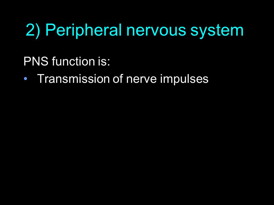 The Peripheral Nervous System (PNS) PNS = only nerves, NOT spinal cord and brain Peripheral Nerves Cranial Nerves
