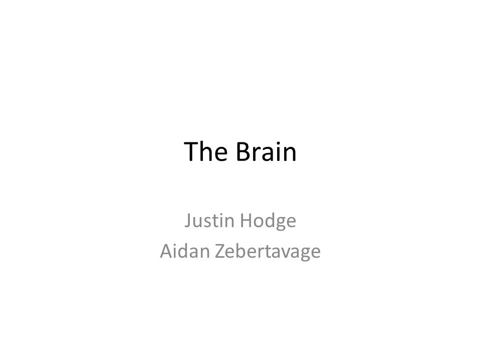 The Brain: Surface Area vs.