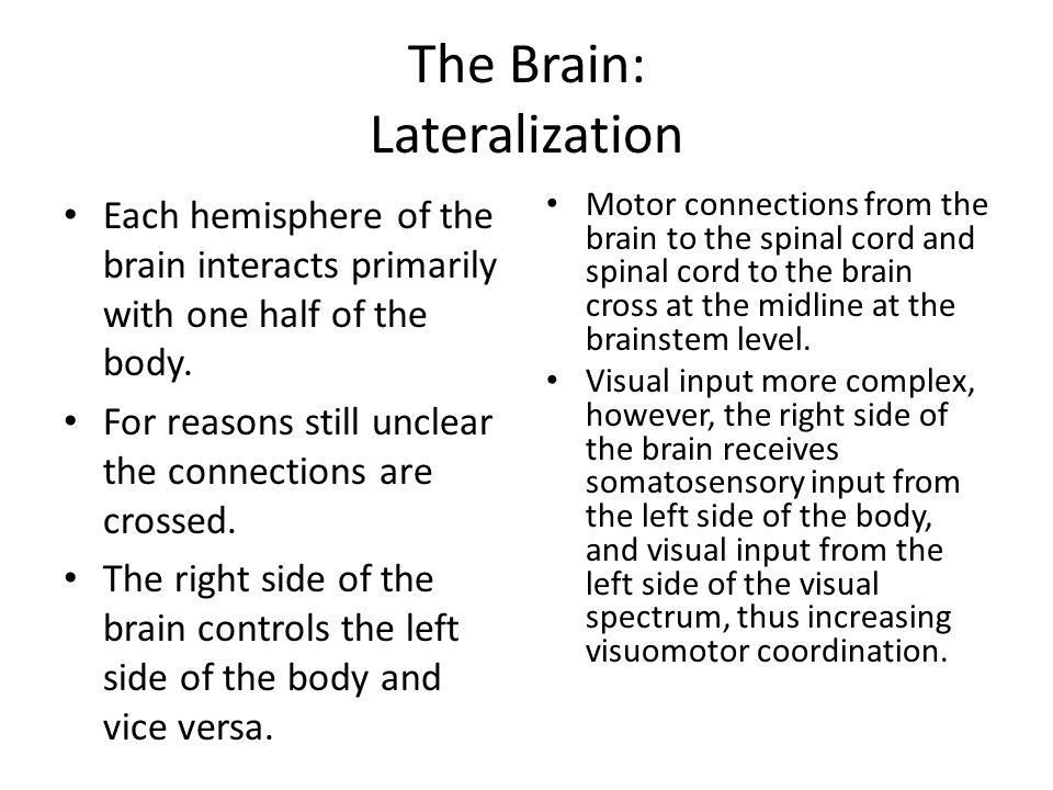 The Brain: Lateralization Each hemisphere of the brain interacts primarily with one half of the body. For reasons still unclear the connections are cr
