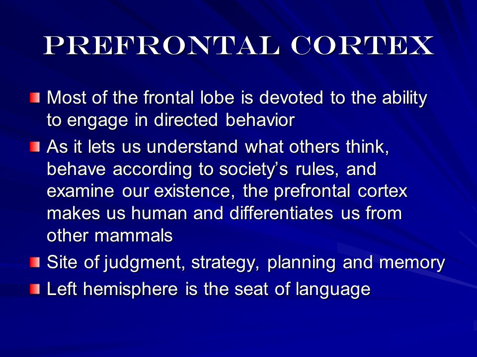 Prefrontal cortex Most of the frontal lobe is devoted to the ability to engage in directed behavior As it lets us understand what others think, behave according to society's rules, and examine our existence, the prefrontal cortex makes us human and differentiates us from other mammals Site of judgment, strategy, planning and memory Left hemisphere is the seat of language
