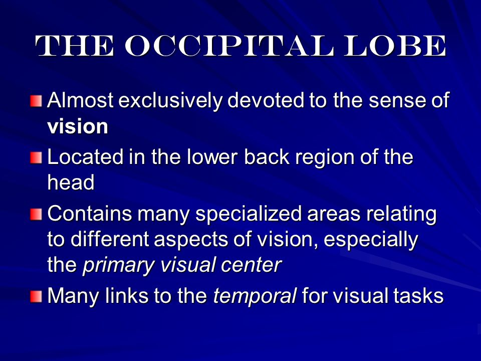 The occipital lobe Almost exclusively devoted to the sense of vision Located in the lower back region of the head Contains many specialized areas relating to different aspects of vision, especially the primary visual center Many links to the temporal for visual tasks