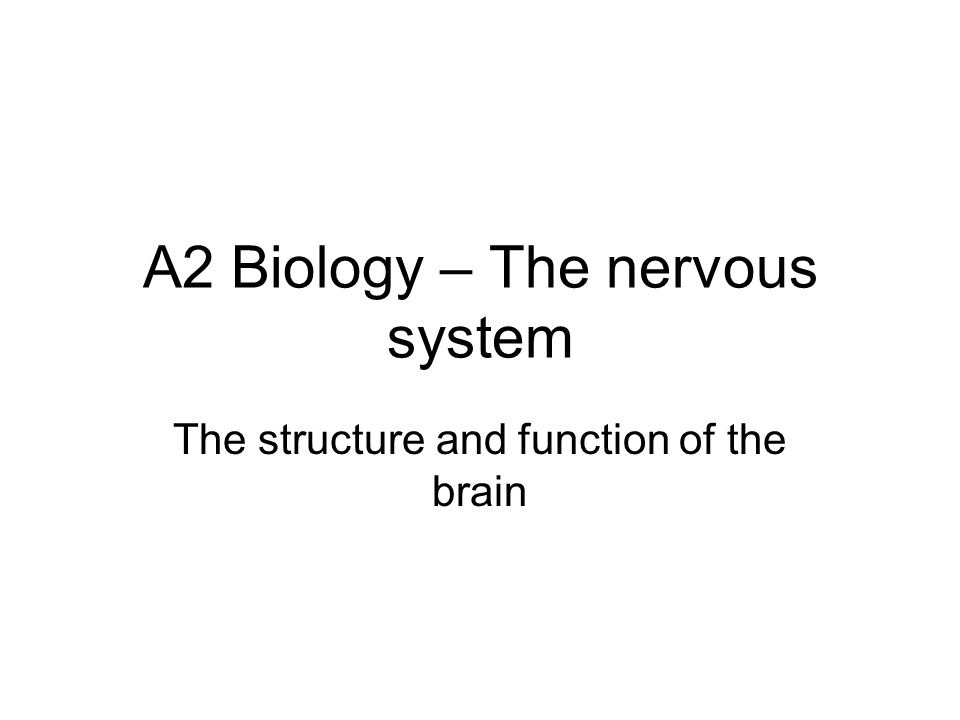 A2 Biology – The nervous system The structure and function of the brain