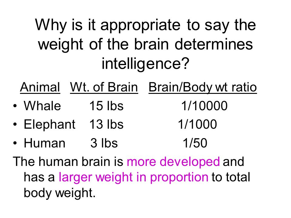 Why is it appropriate to say the weight of the brain determines intelligence.